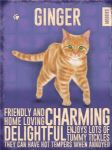 Metal Wall Kitchen Sign Vintage Retro Style Ginger Cat Lovers Gift